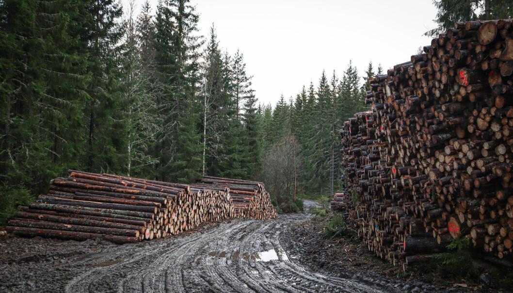 Tømmeret kan hope seg opp langs skogsbilveier i vinter. Her fra Dragalvika på Austmarka.