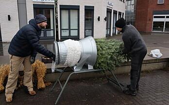 De håper å selge 500 juletrær