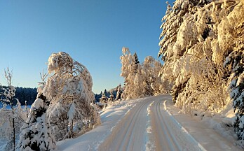 Se oversikt over skiløyper i og rundt Kongsvinger