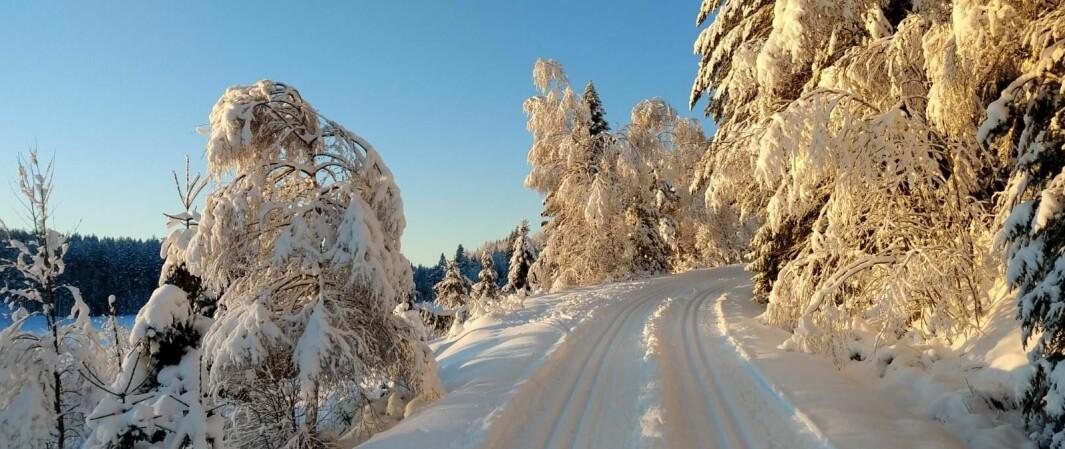 Skiløyper i og rundt Kongsvinger