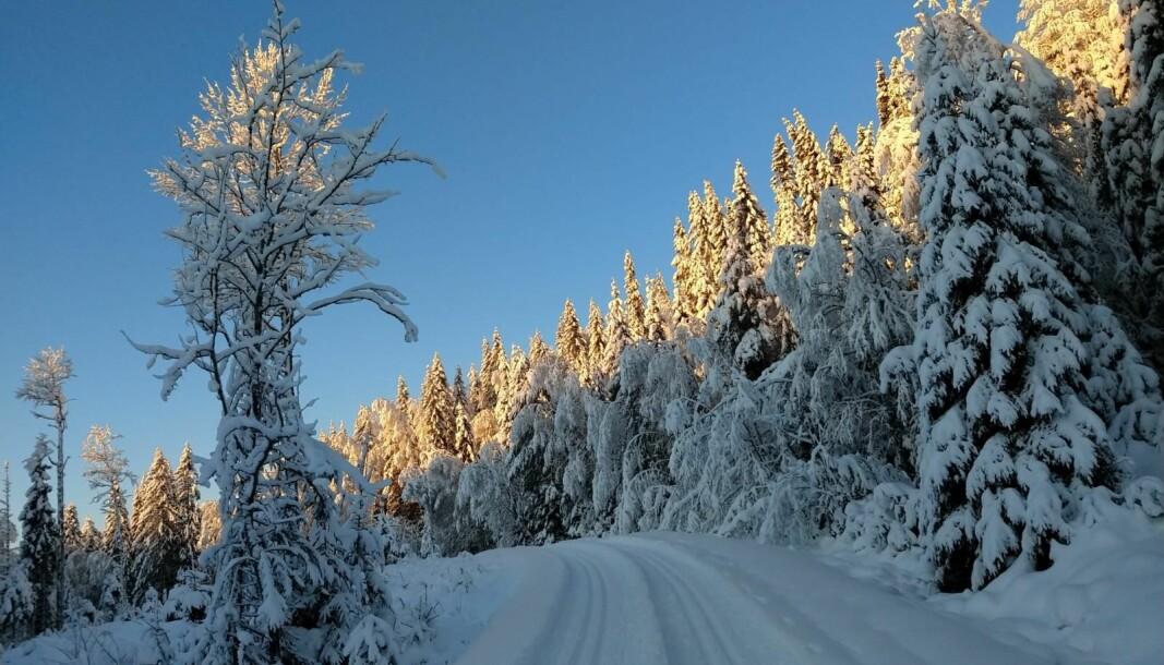 Slik var skiforholdene ved Speismark mandag.