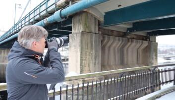 Tom Jørgensen tar mange bilder ute. Her fotograferer han duer under brua.