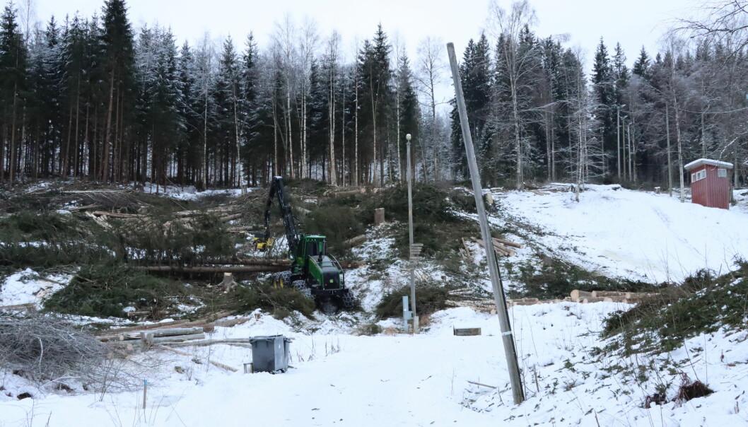 Nå jobbes det med hugge ned trær i Puttara. Slik ser det ut 2. februar