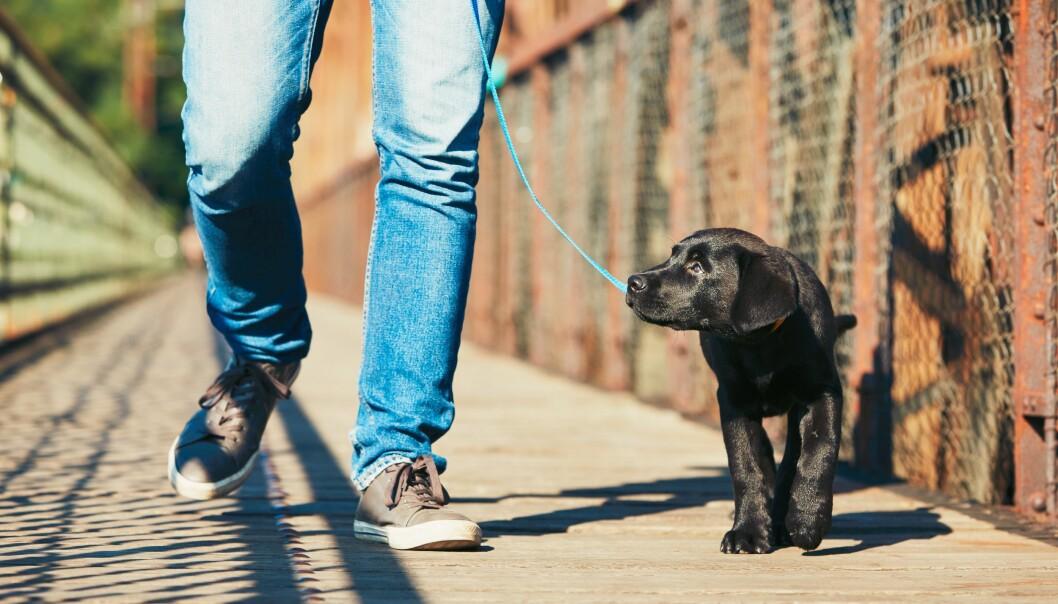 Hundeekspert Jan Mohn Andreassen mener det er viktig å ta hensyn til hunden når du skal gå tur.