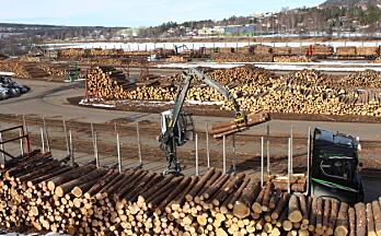 Sagtømmerprisen stiger: – Et godt tegn for den norske tømmerbransjen
