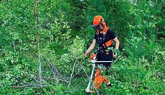 Ungdommen skal ta seg av skogen i sommer