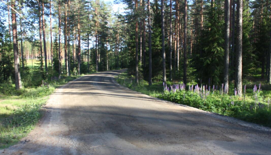Her ved avkjøringen til Austmarkavegen stopper nå asfaltdekket på Snareveien.