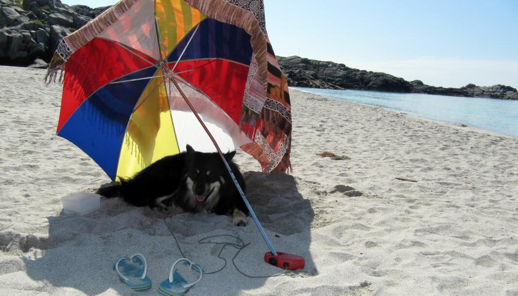 Varme sommerdager er ikke like stas når du også må gå rundt med pels. Det er derfor viktig å passe på at dyrene ikke blir for varme i sommersola.
