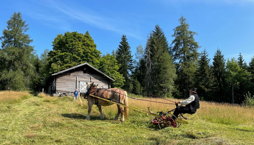 Hestekaren Odd Roar Stenby fra Blaker hadde tatt med seg Dølahesten Tømtevår til Varaldskogen for å vise fram gamle slåtteteknikker.