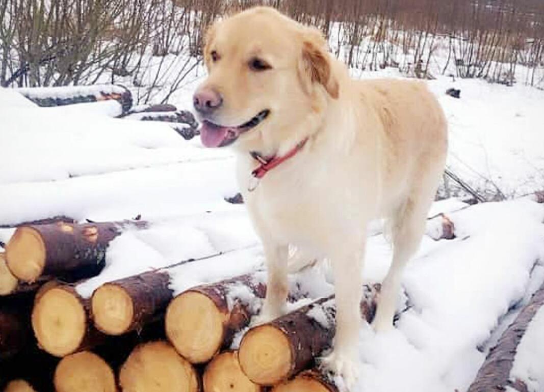 Dette er Vilma, en tilsynelatende glad og lykkelig hund.